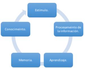 Figura 1 Proceso esquemático de aprendizaje y desarrollo del conocimiento